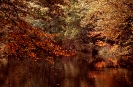 Natur Pur - Kanu in Masuren_10